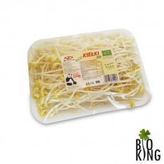 Kiełki soi ekologiczne Solida Food