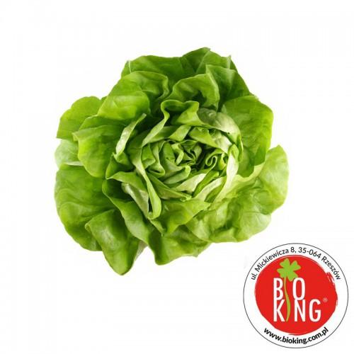 Sałata masłowa bio ekologiczna Barwy Zdrowia