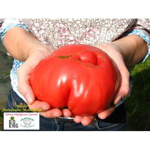 Pomidor Starodawna Malinówka - rozsada
