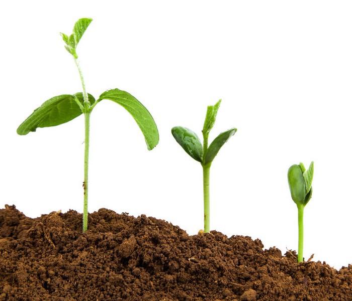 Organiczny ogród