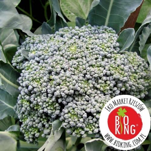 Brokuł Calabrese Natalino - rozsada