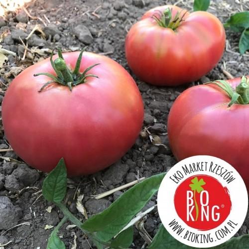 Pomidor amerykański Fred Limbaugh - rozsada