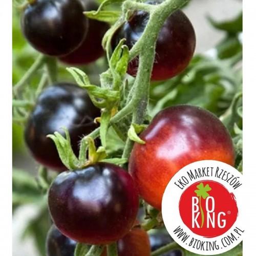 Pomidor granatowy Blue Bayou - rozsada