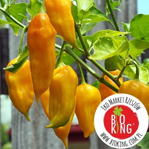 Papryka Bhut Jolokia Yellow – rozsada