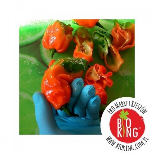 Papryka Trinidad Scorpion Butch T– rozsada
