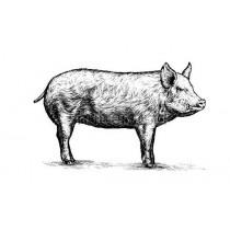 Wieprzowina ekologiczna