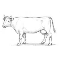 Wołowina ekologiczna