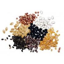 Nasiona, ziarna, strączki