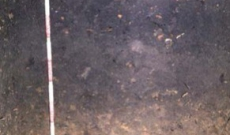 Humus próchnica - jedna z najbardziej wartościowych i tajemniczych warstw gleby.