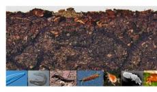 Mikroorganizmy glebowe – wstęp.